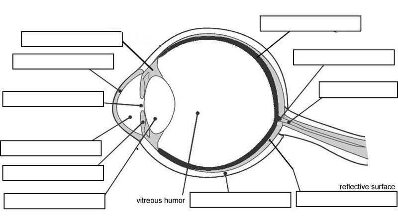 11 Best Images of Parts Of The Eye Worksheet For Kids