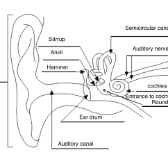 Outter Ear Diagram Labeled Human Nema 14 50 Wiring 11 Best Images Of Parts The Eye Worksheet For Kids