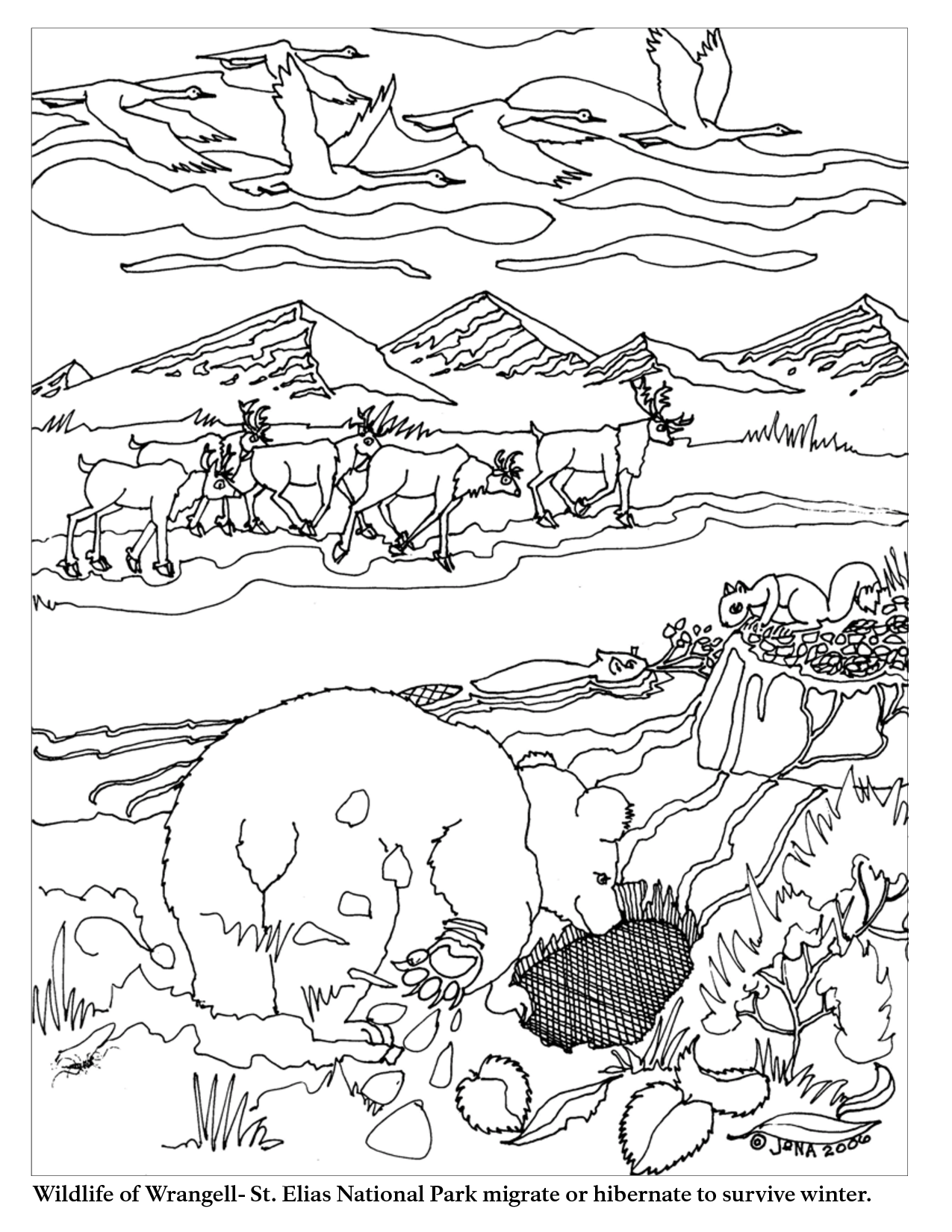 Animal Migration Coloring Pages Sketch Coloring Page