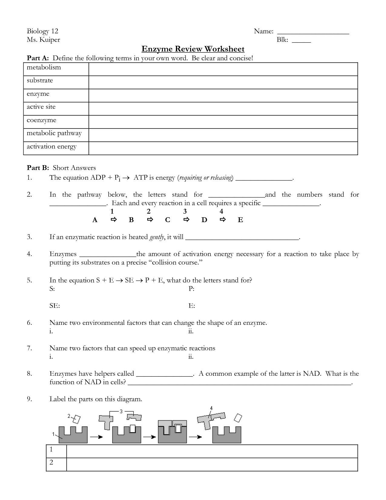 30 Ap Biology Enzymes At Work Worksheet Answers