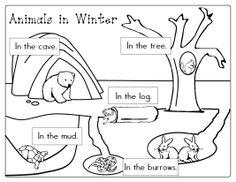 13 Best Images of Where Do Animals Hibernate Worksheet