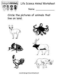 12 Best Images of Animal Worksheets For Kindergarten ...