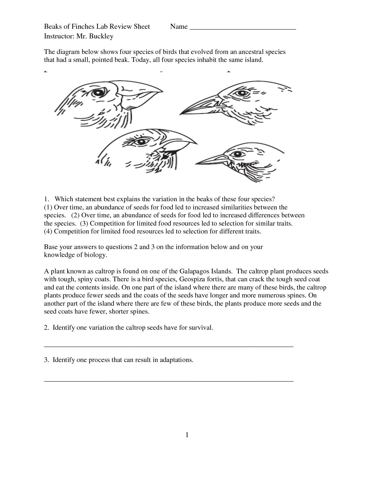 9 Best Images Of Worksheets Bird Info