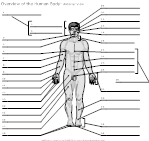 11 Best Images of Muscle Labeling Worksheet Pearson
