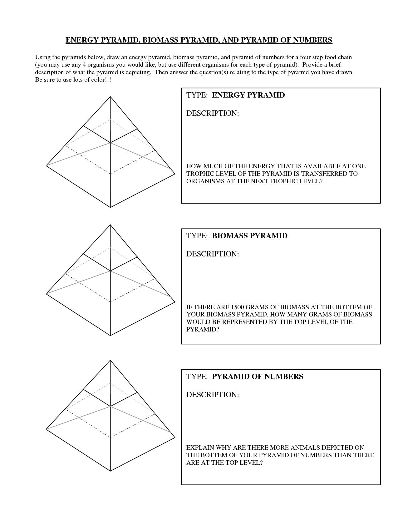 11 Best Images Of Energy Chains Worksheet