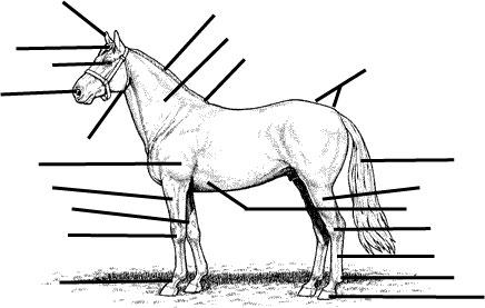 15 Best Images of Horse Anatomy Worksheets Printable