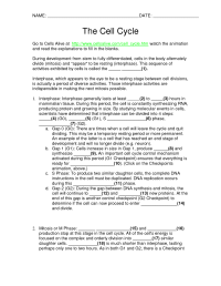The Cell Cycle Worksheet | www.imgkid.com - The Image Kid ...