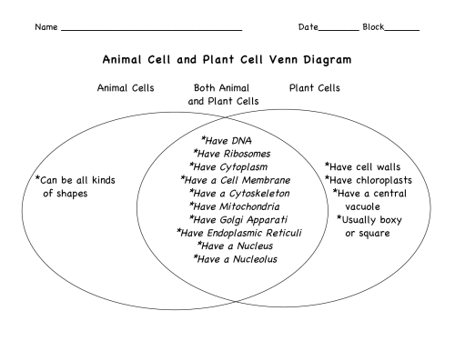 small resolution of Comparison Of Plant And Animal Cell Worksheets   Printable Worksheets and  Activities for Teachers