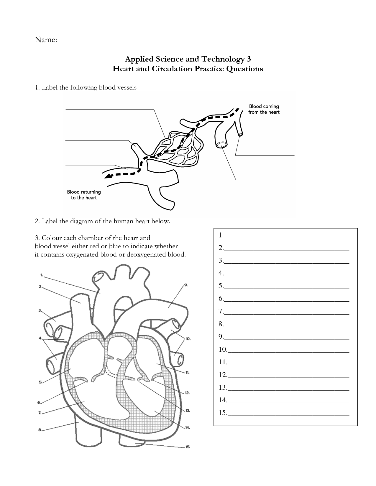 heart anatomy diagram worksheet of when baby teeth fall out 11 best images blank with word