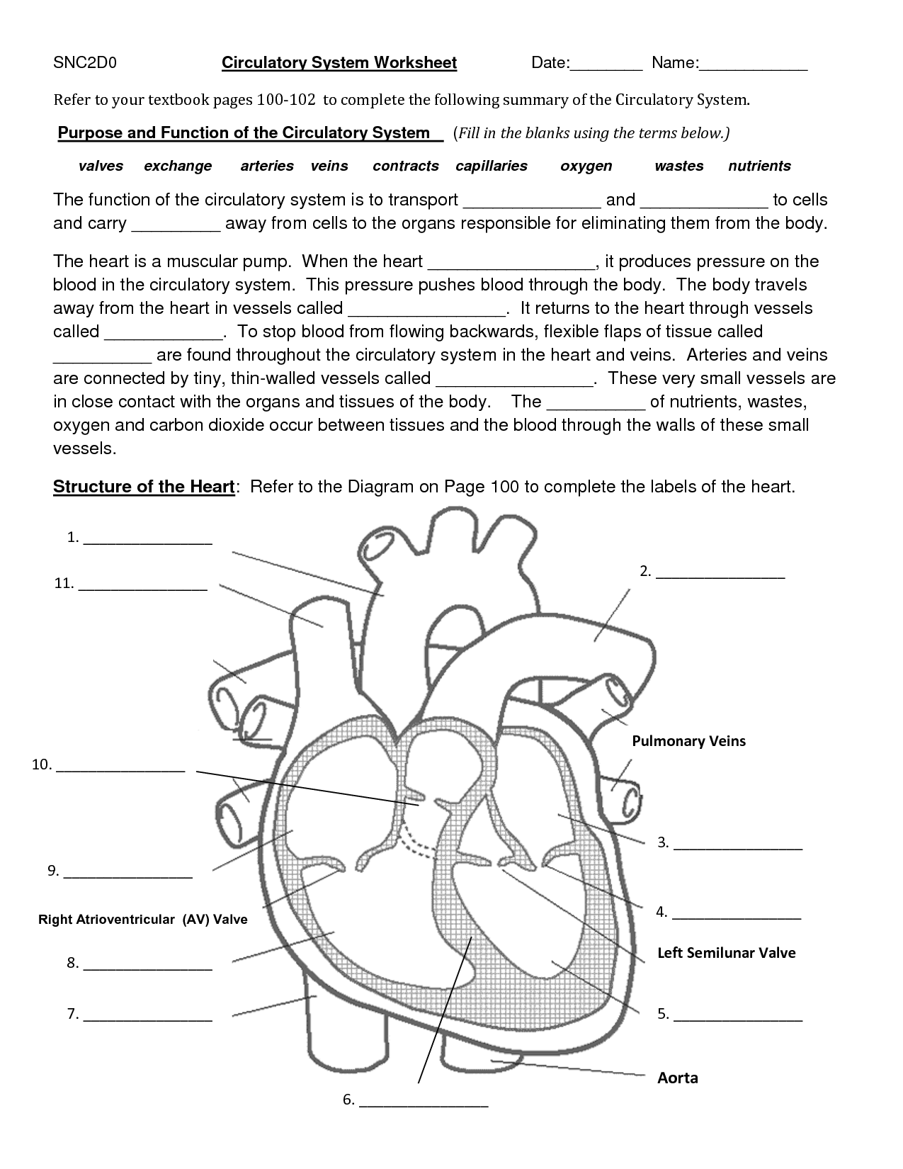 circulatory system heart diagram worksheet basic house wiring diagrams 11 best images of blank with word