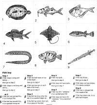 10 Best Images of Dichotomous Key Worksheets Answers ...