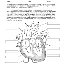 Circulatory System Diagram To Label Xs650 Wiring 11 Best Images Of Blank Heart Worksheet With Word