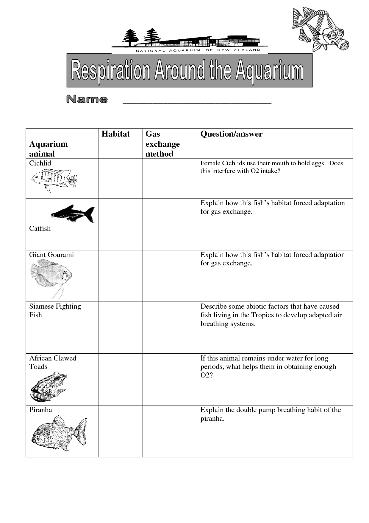14 Best Images Of Phycial Animal Adaptations Worksheets