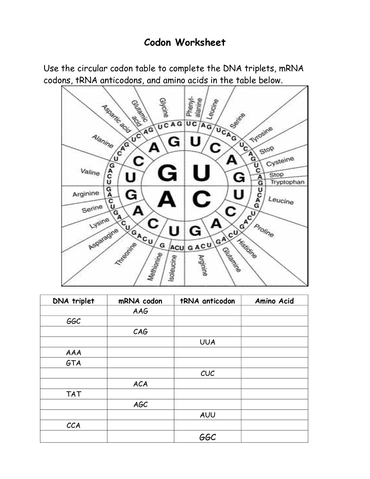 Protein Synthesis Codons Worksheet Answer Key