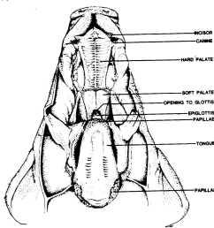 pig dissection diagram label 314498112373402707weeblycom pig pig dissection diagram labeled pig diagram label [ 1280 x 1263 Pixel ]