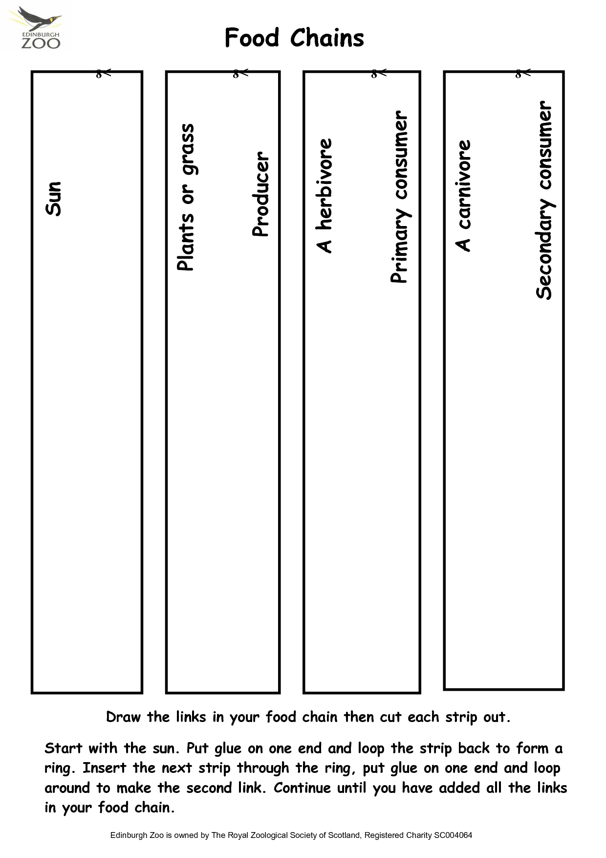 11 Best Images Of Food Chain Worksheet