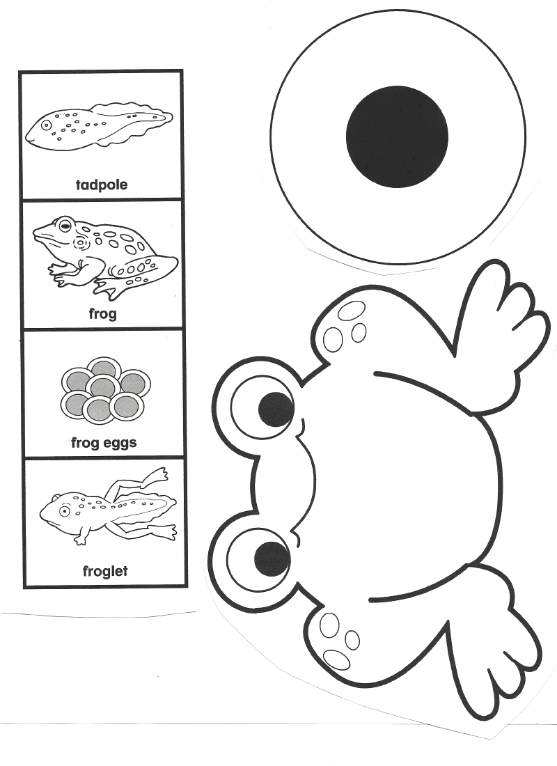 10 Best Images of Frog Worksheets For Elementary