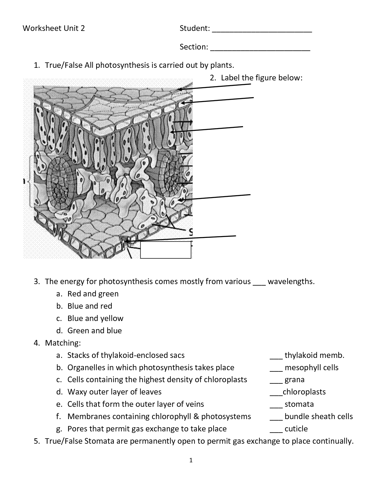 12 Best Images Of Photosynthesis Diagrams Worksheet Answer Key