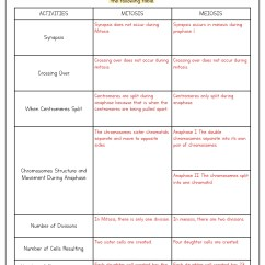 Mitosis And Meiosis Stages Diagram Single Phase Motor Reversing Wiring 16 Best Images Of Worksheet