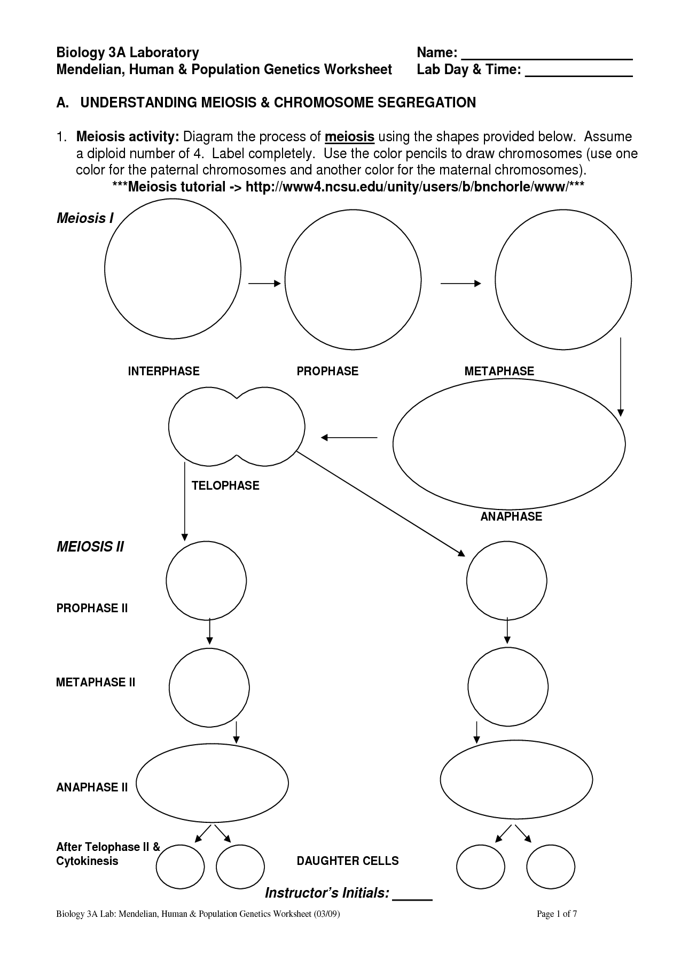 Diagram Mitosis Worksheet Answers
