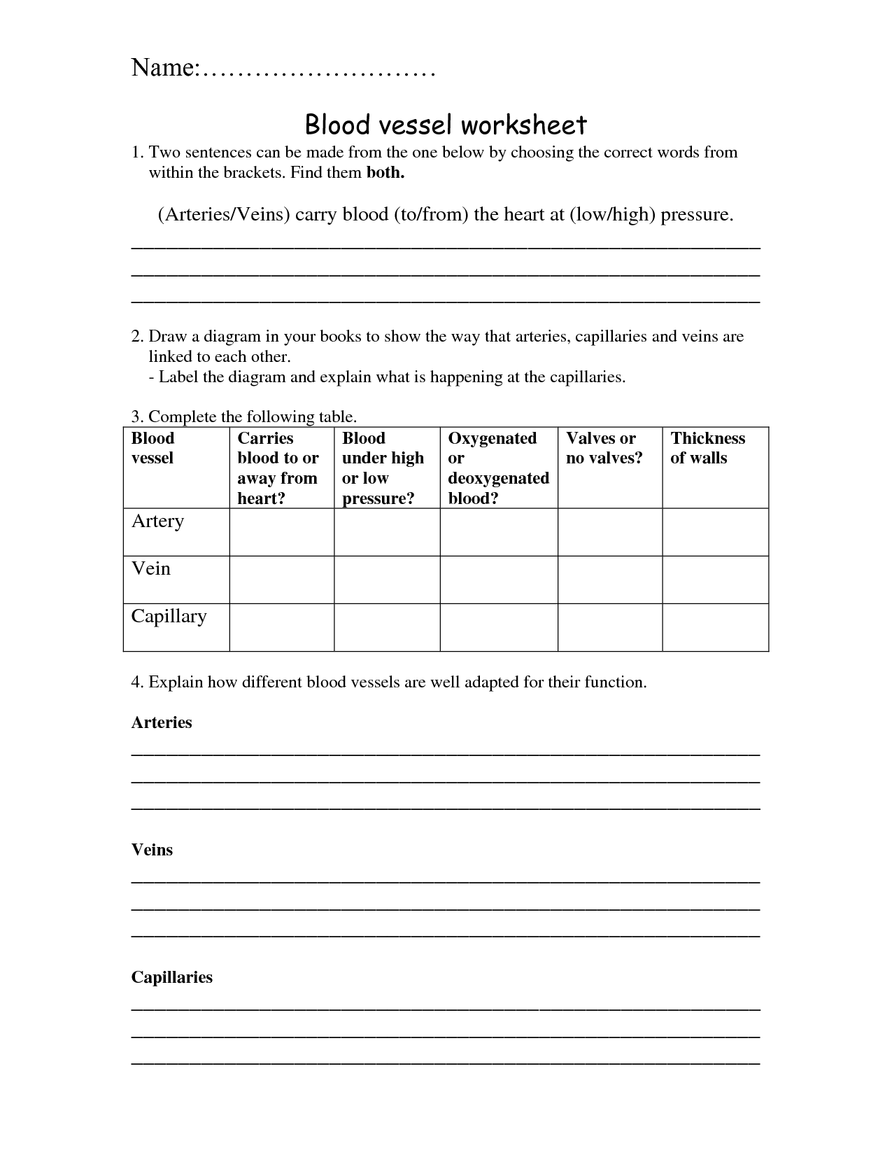 9 Best Images Of Blood Vessels Worksheet