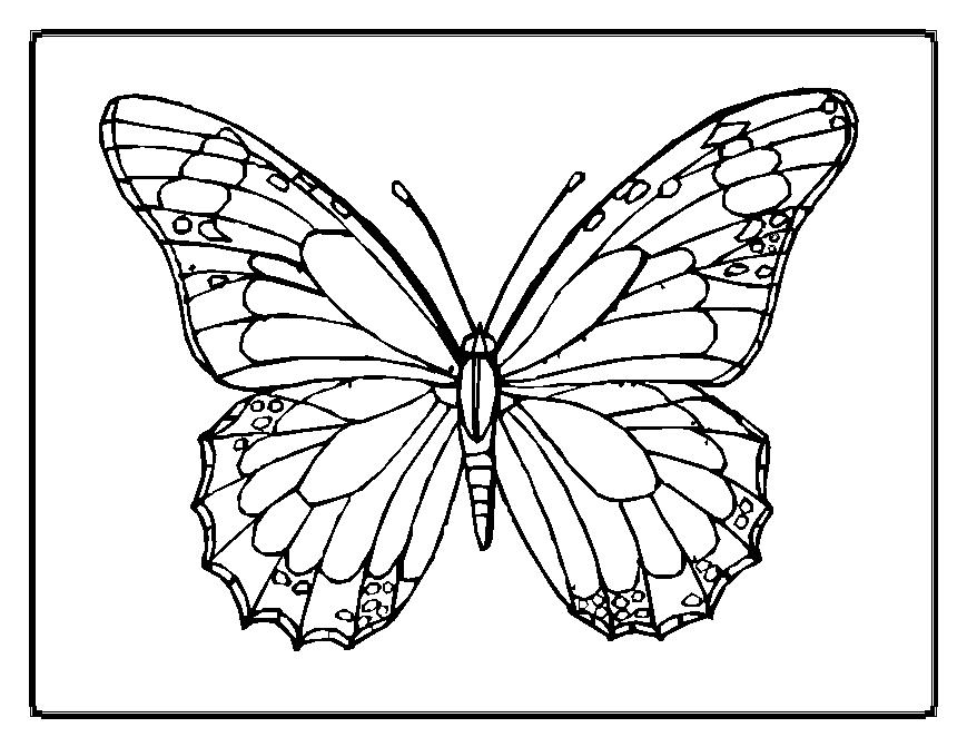 6 Best Images of Cut And Paste Insect Worksheets