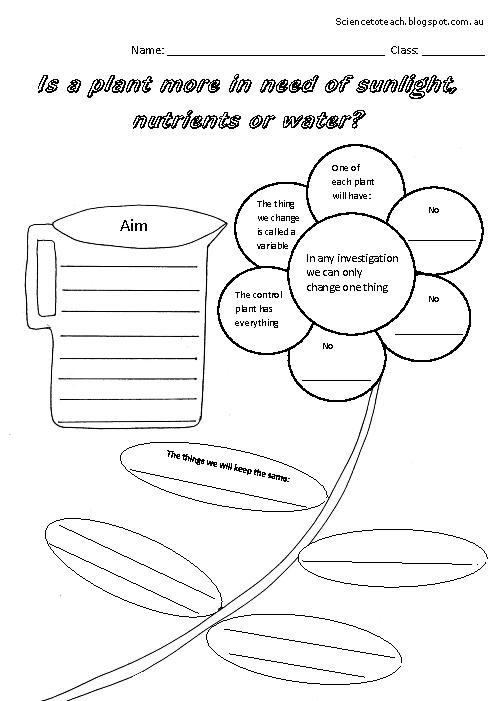 18 Best Images of First Grade Science Plant Worksheet