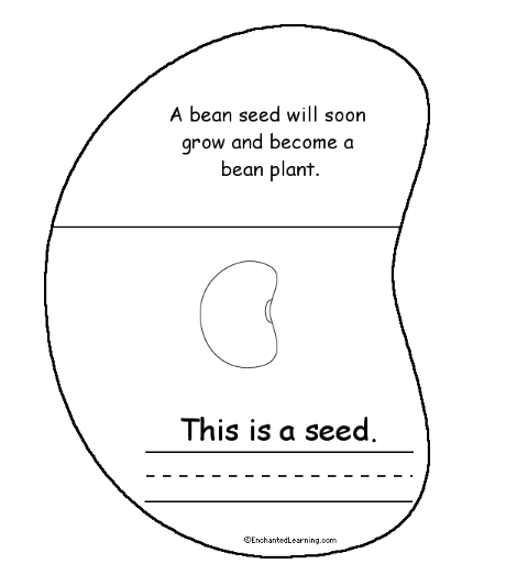 18 Best Images of First Grade Science Plant Worksheet