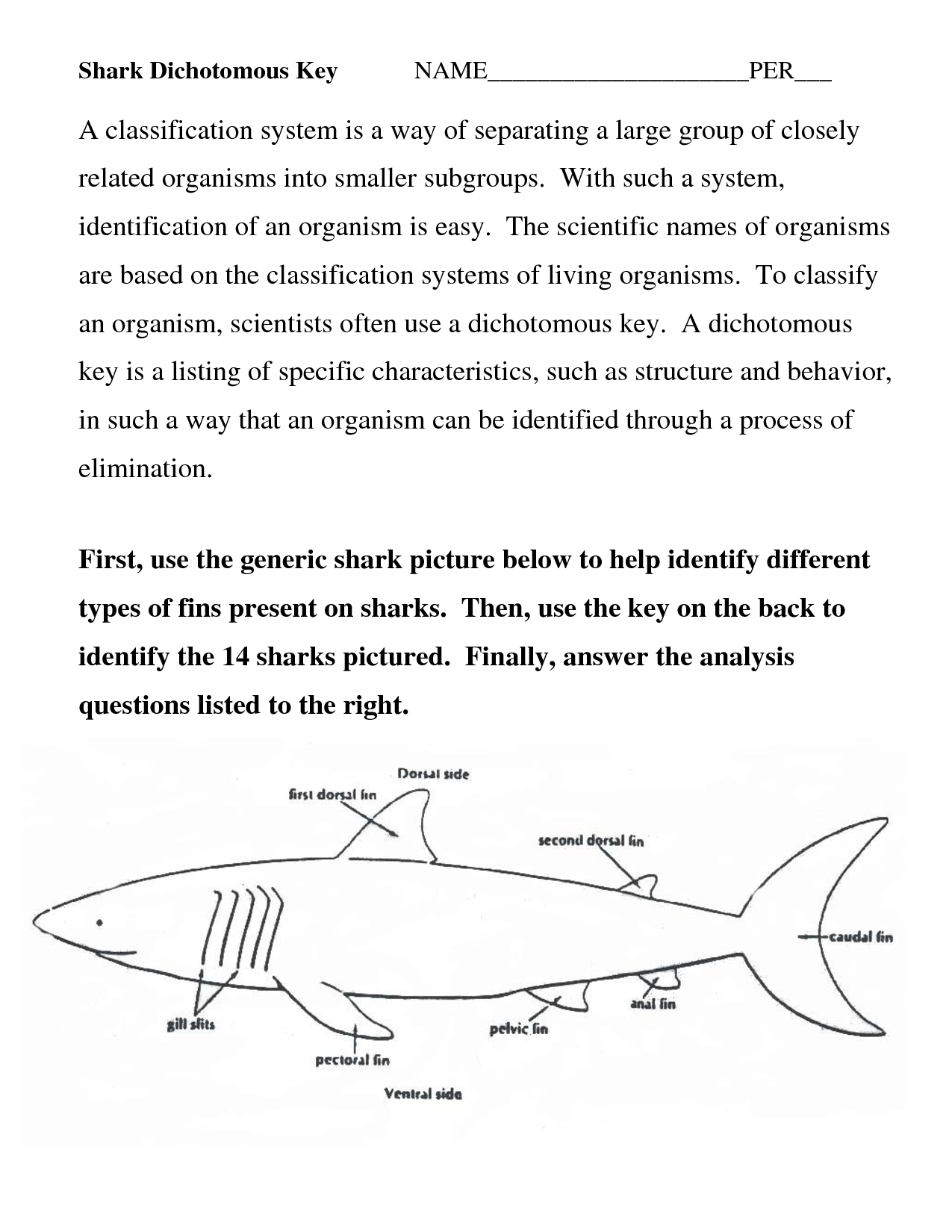 13 Best Images Of Dichotomous Key Worksheets