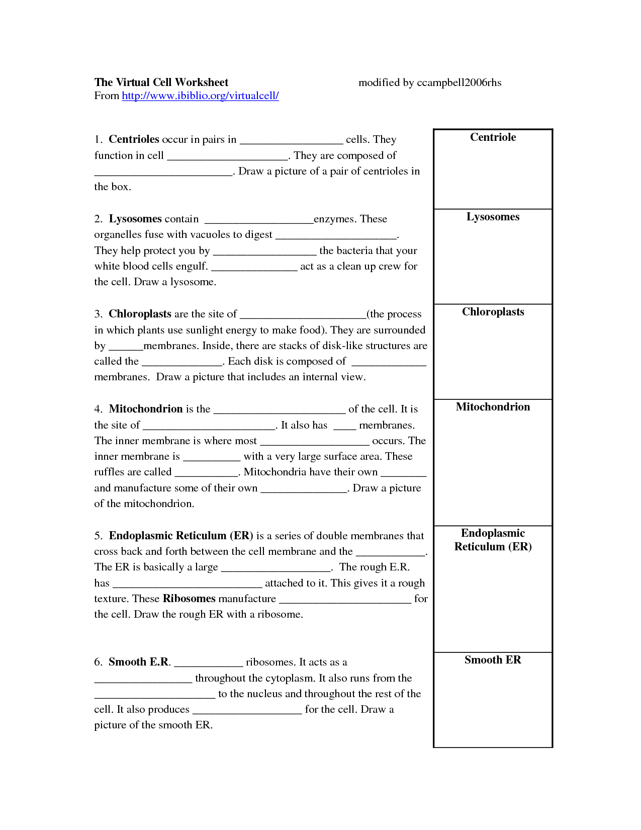 16 Best Images Of Cell Processes Worksheet