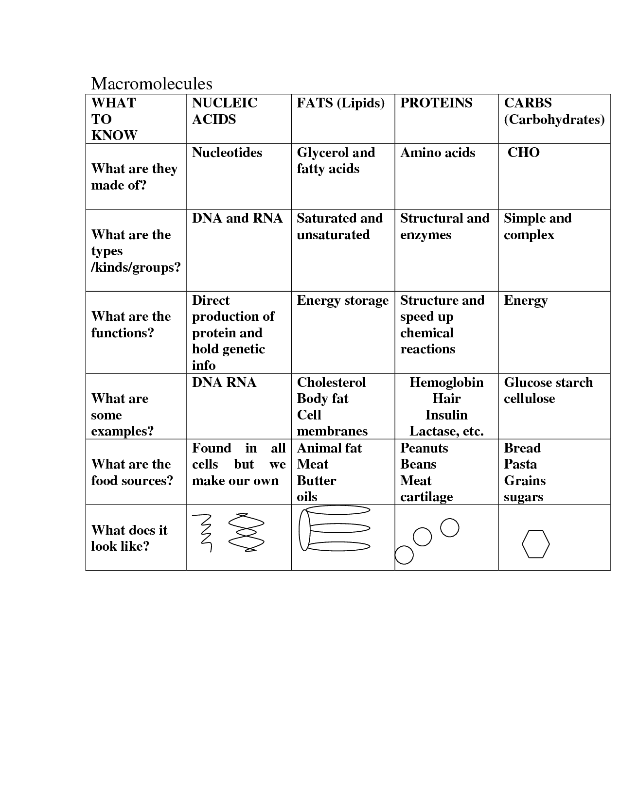 Protein Macromolecules Worksheet Answers