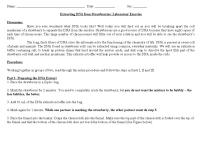 19 Best Images of DNA Replication Structure Worksheet And ...