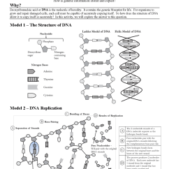 Sequence Diagram Exercises And Solutions Corn Plant Life Cycle 19 Best Images Of Dna Replication Structure Worksheet