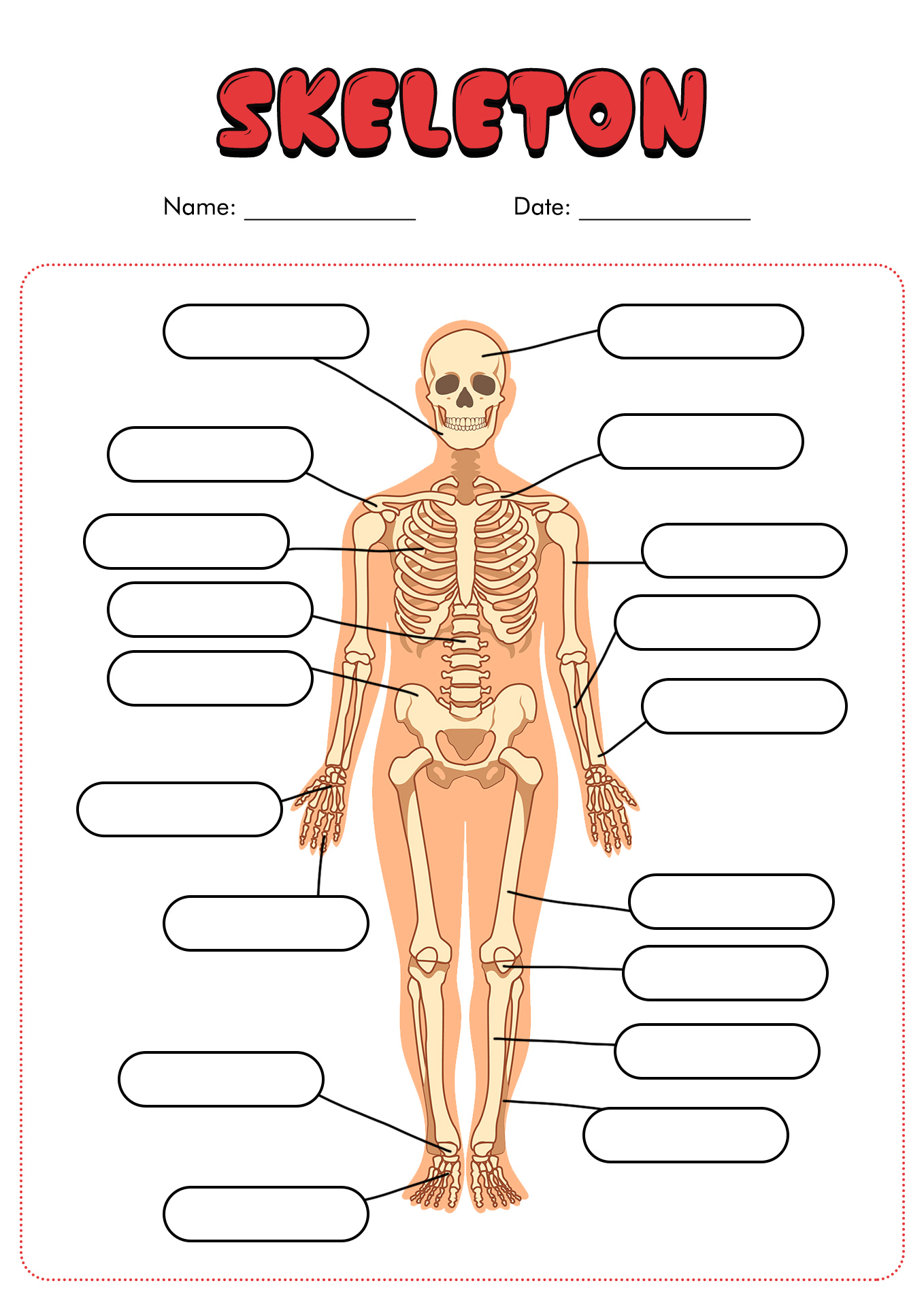 11 Best Images Of Blank Anatomy Worksheets