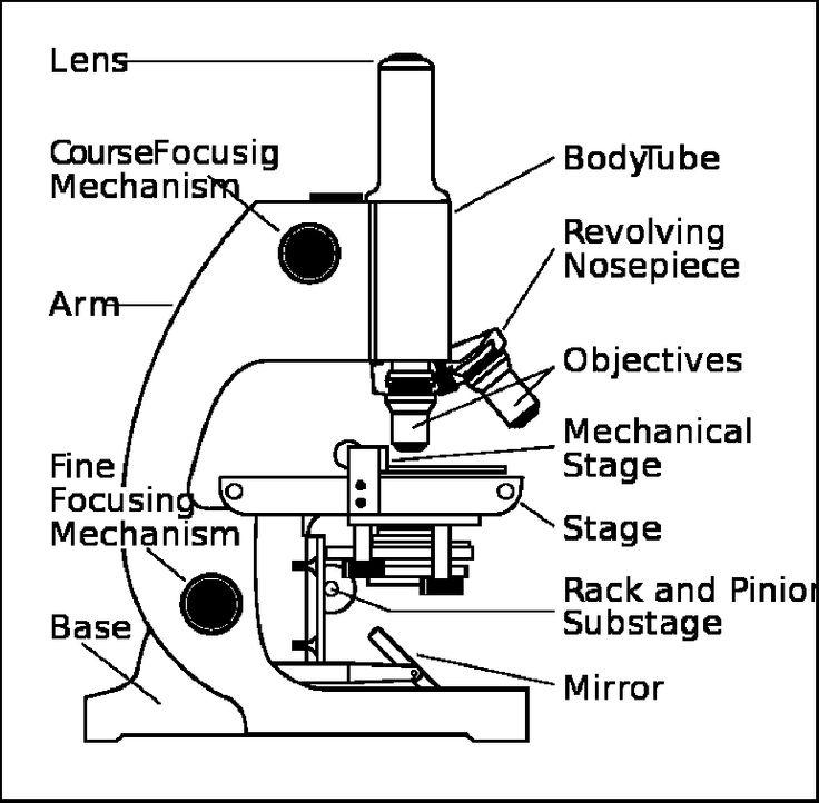 Diagram Compound Microscope Diagram