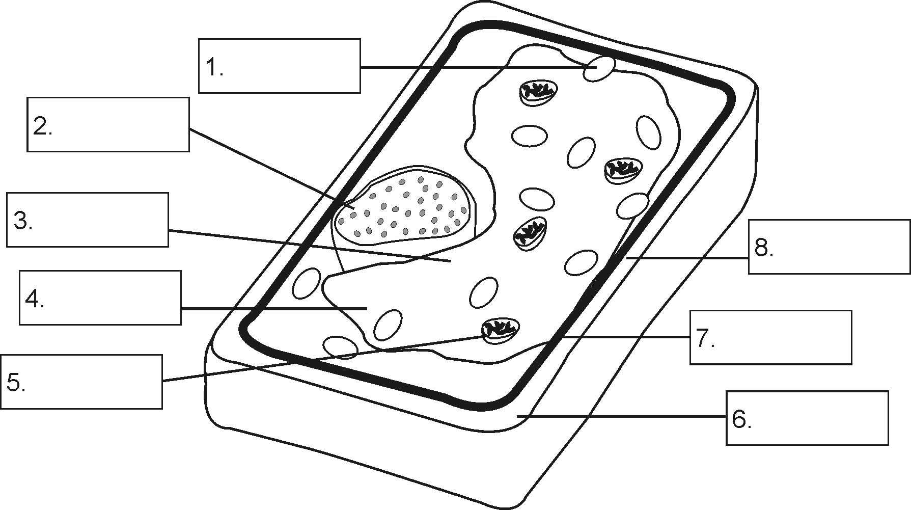 14 Best Images Of Labeled Plant Cell Parts Worksheet