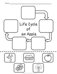 11 Best Images of Kindergarten Apple Life Cycle Worksheet