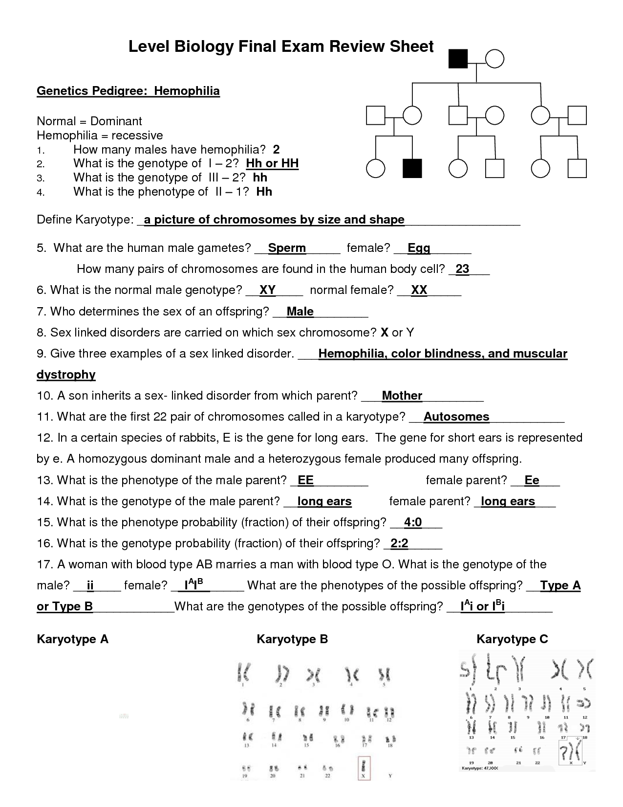 30 Molecular Biology Worksheet Answers