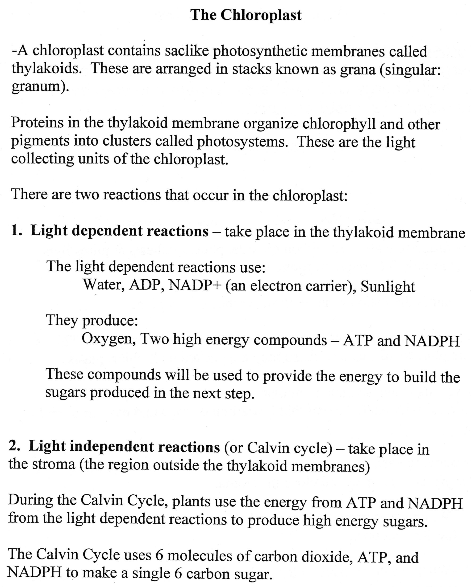 9 Best Images Of Photosynthesis Worksheets High School