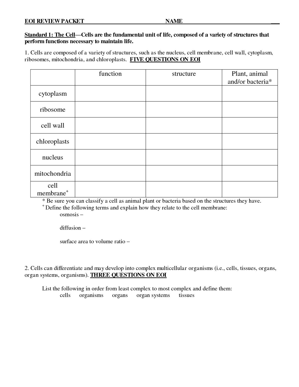 Things We Get From Plants Worksheet