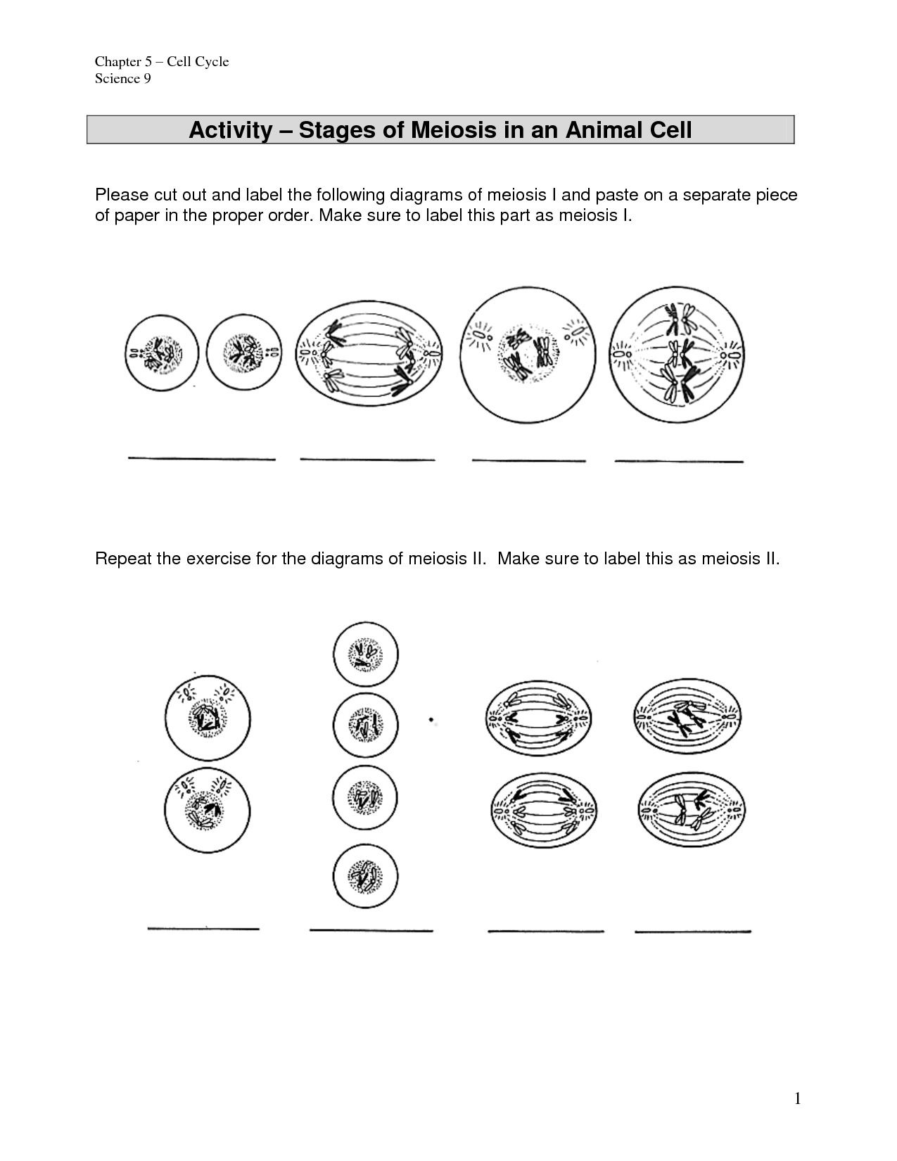 35 Mitosis Sequencing Worksheet 39 Answers