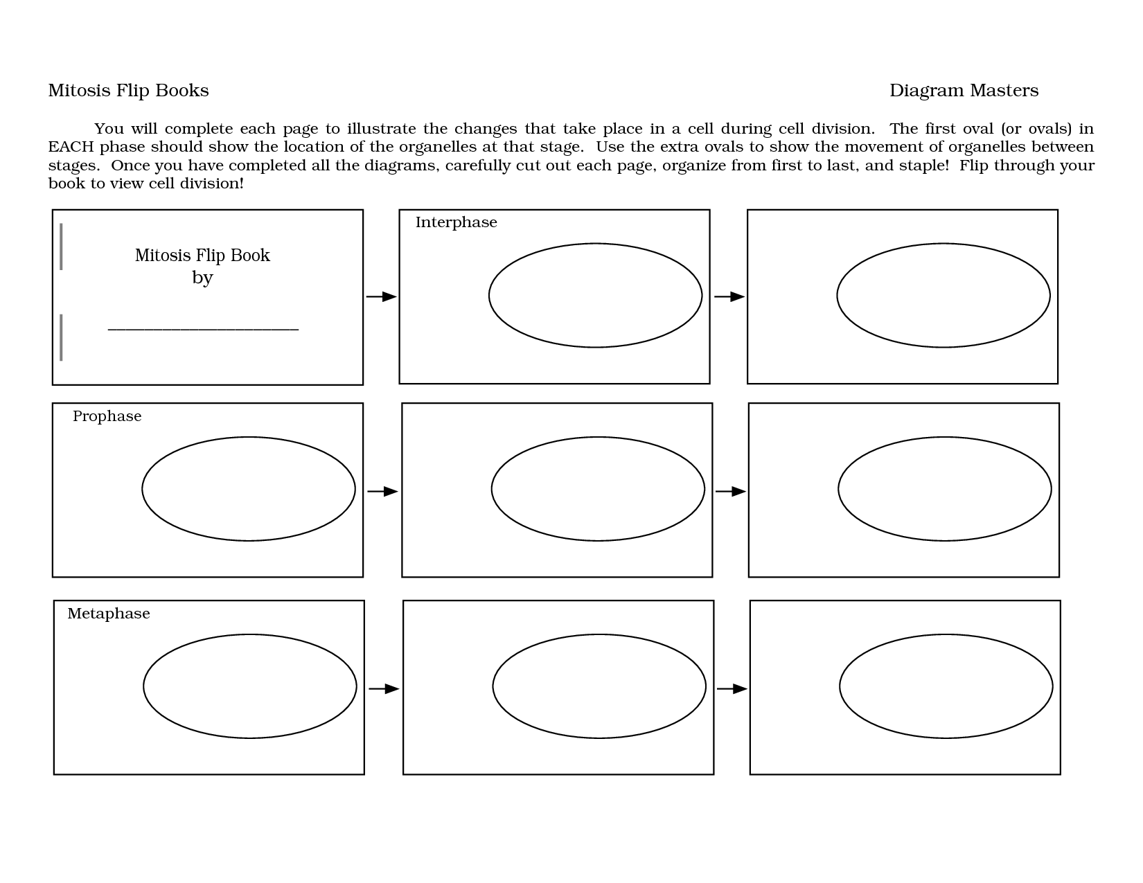 Diagram Mitosis Worksheet Answers