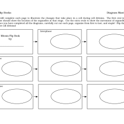 Meiosis Diagram Worksheet 1999 Toyota Corolla Radio Wiring 13 Best Images Of Mitosis Answers