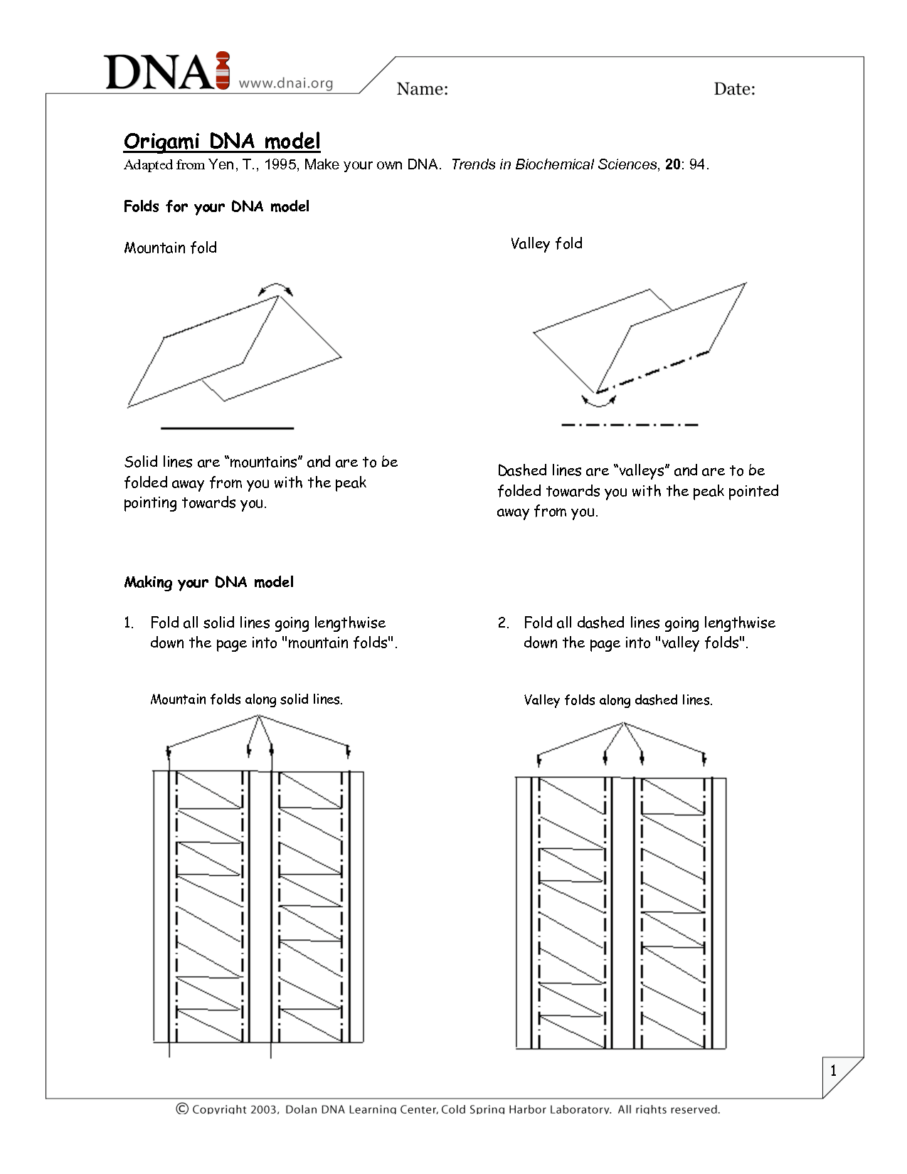 Dna Origami Worksheet