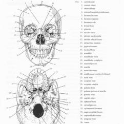 Human Skull Bones Diagram Labeled Electric Car 13 Best Images Of Skeleton Worksheets - Back, ...