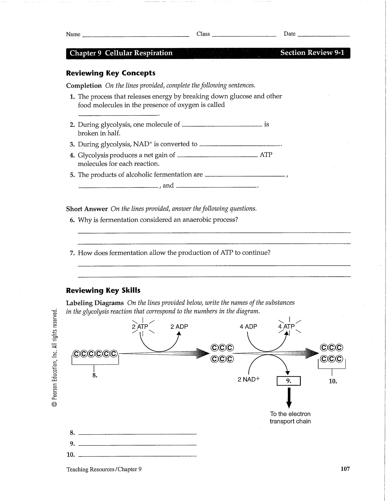 Mitosis And Cancer Worksheet Cell Division And The Cell