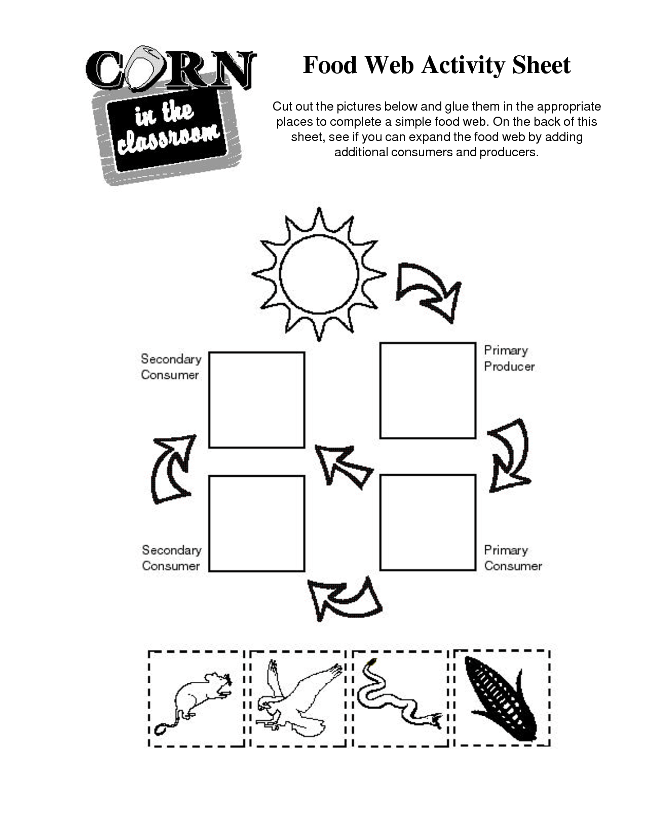 8 Best Images Of Food Chains And Web S Worksheets