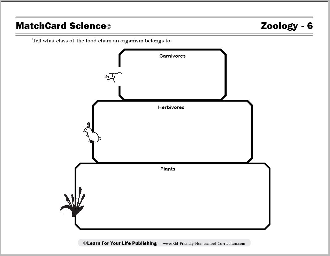 14 Best Images Of Simple Food Chain Worksheets
