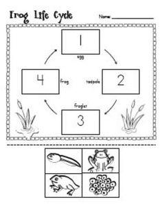 11 Best Images of Frog Life Cycle Worksheet Cut And Paste