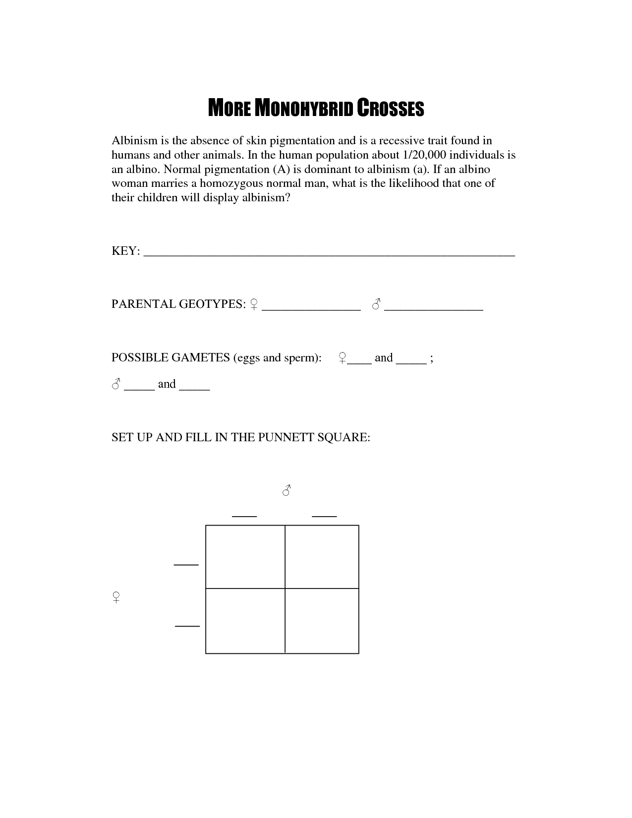 Punnett Square Worksheet 18
